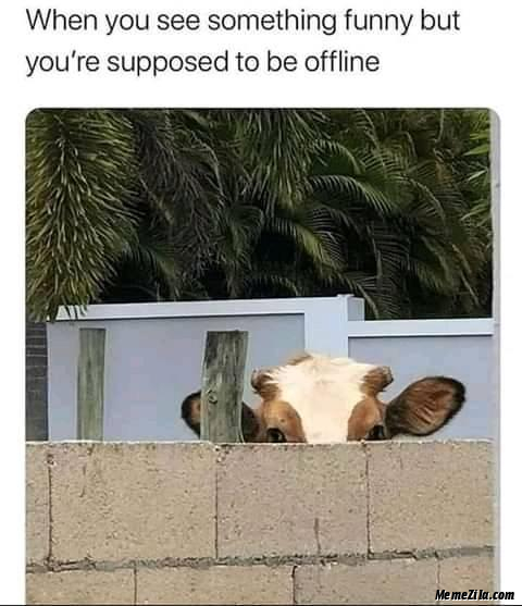 When you see something funny but you are supposed to be offline meme