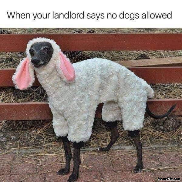 When your landlord says no dogs allowed meme