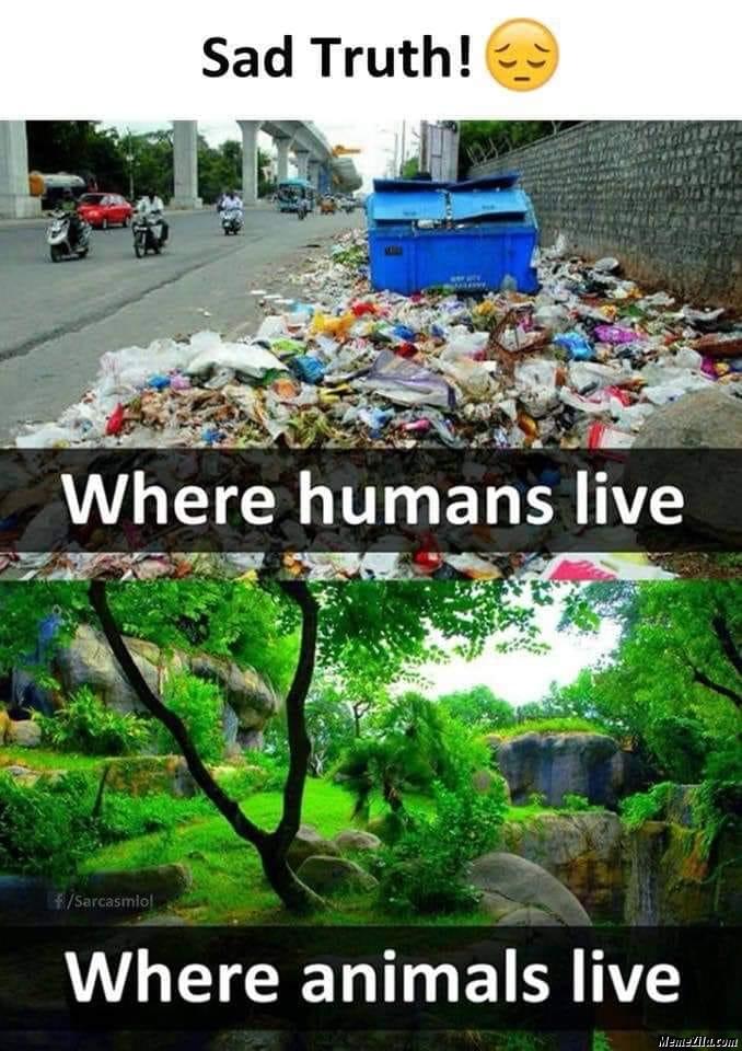Where humans live vs where animals live meme