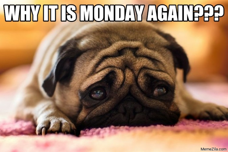Why it is monday again meme