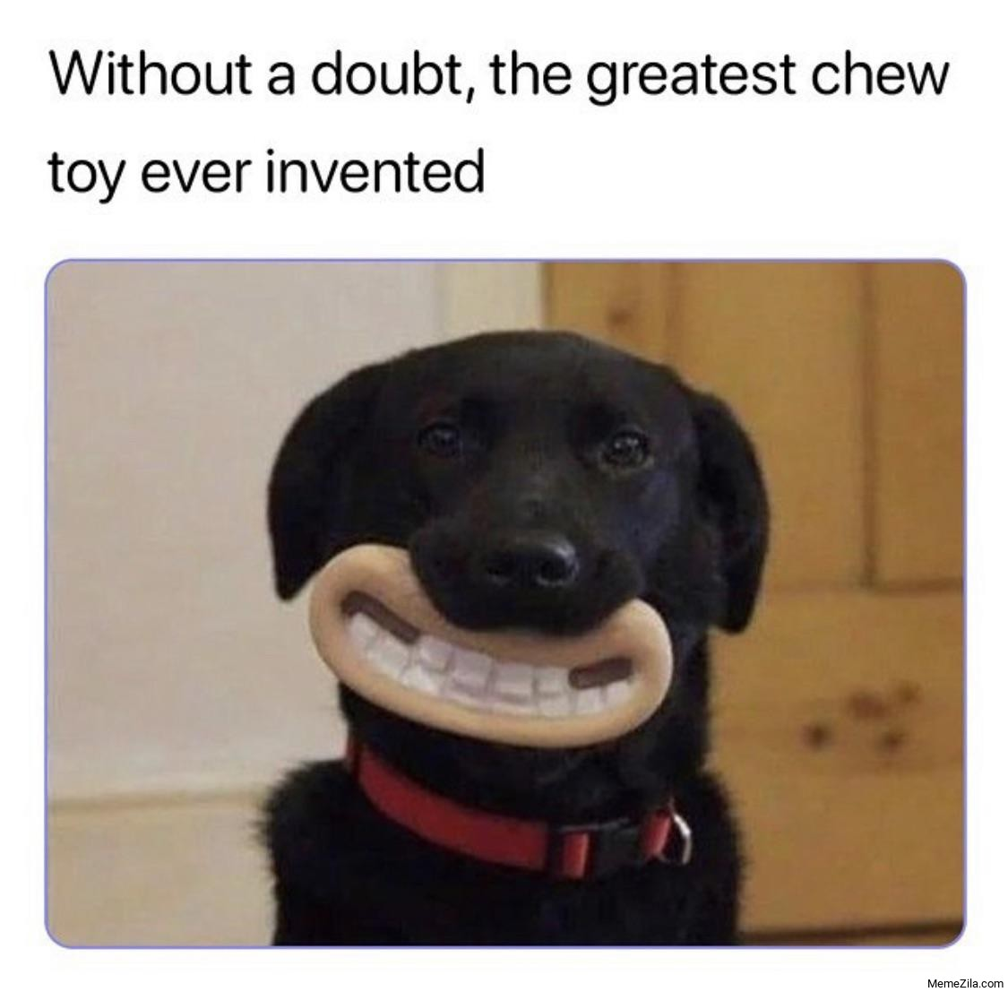 Without a doubt the greatest chew toy ever invented meme