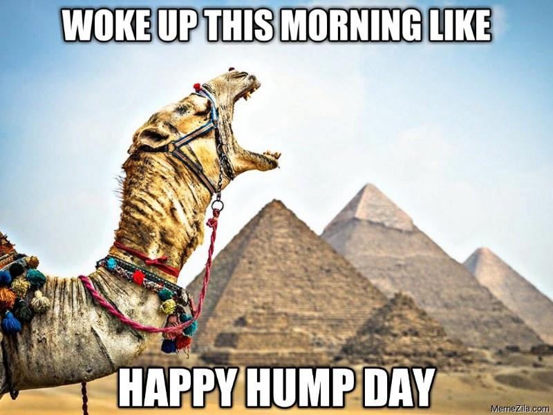 Woke up this morning like happy hump day meme