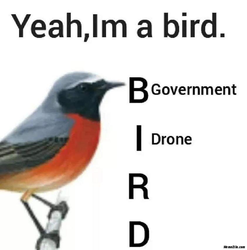 Yeah I am a bird Government drone meme