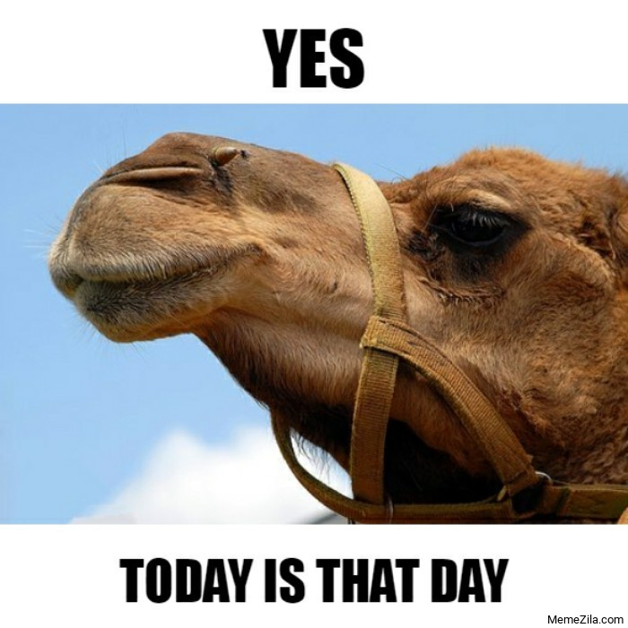 Yes Today is that day meme
