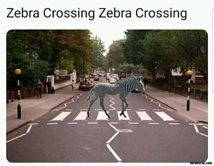 Zebra crossing zebra crossing meme